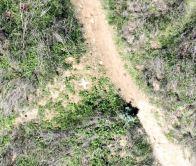 aerial Target